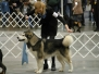 Bill 2004 Morgans dog show
