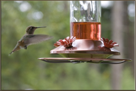 Hummers 2008_01