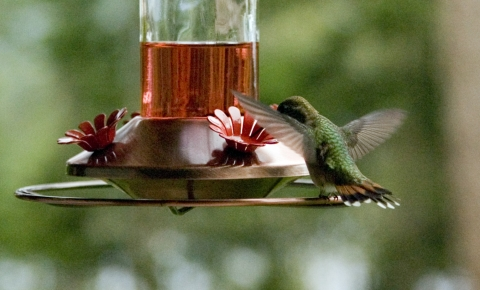 Hummers 2008_02