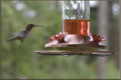 Hummers 2008_03