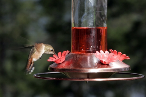 Hummers 2008_05