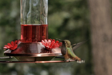 Hummers 2008_07