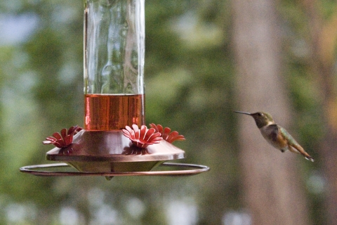 Hummers 2008_09