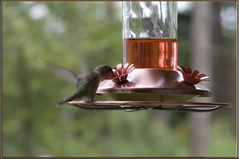 Hummers 2008_10
