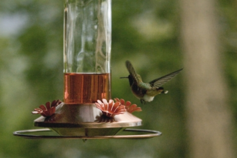 Hummers 2008_11