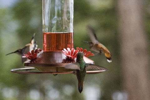 Hummers 2008_14