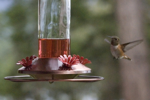 Hummers 2008_15