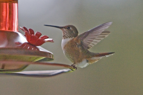 Hummers 2008_16