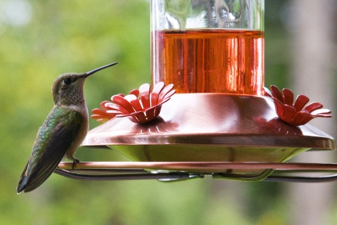 Hummers 2008_17