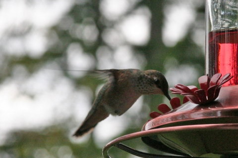 Hummers 2008_18